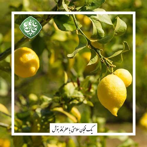 فواید و خواص لیمو ترش